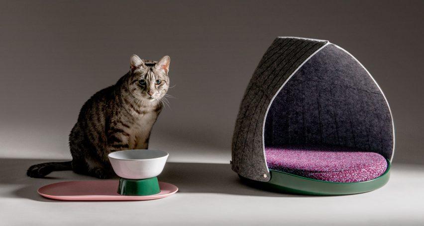 Esempio pet design gatto