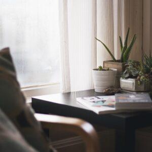 Piante da appartamento: quale scegliere