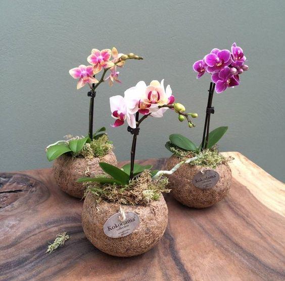 Pianta da interno non nociva: orchidea