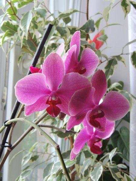 orchidee per camera da letto