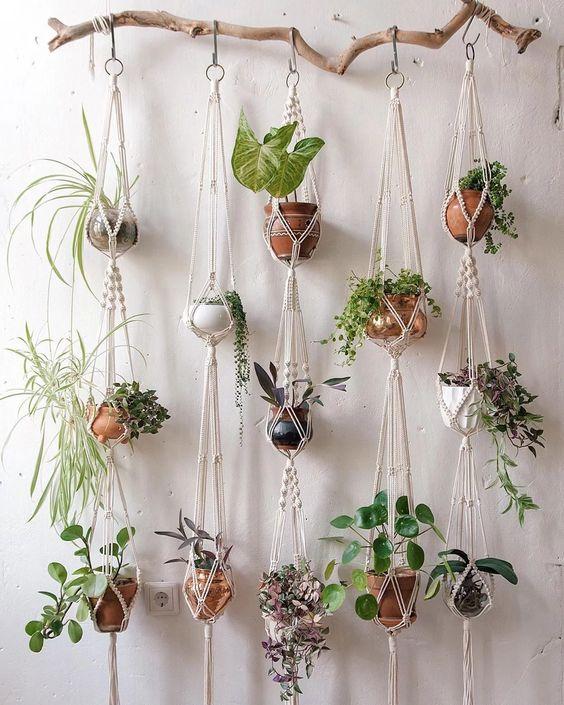 appendere piante alla parete