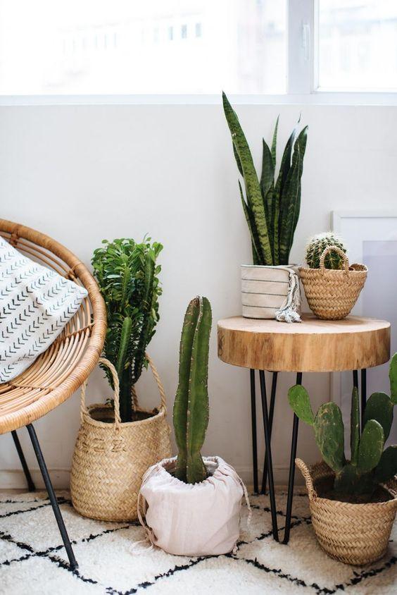 Salotto con piante