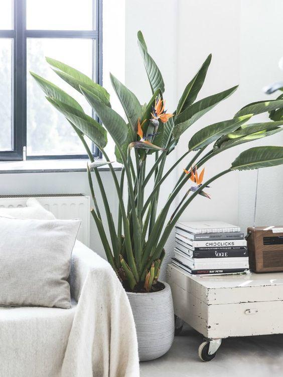 Piante per soggiorno con fiore